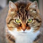 Frontline für Katzen