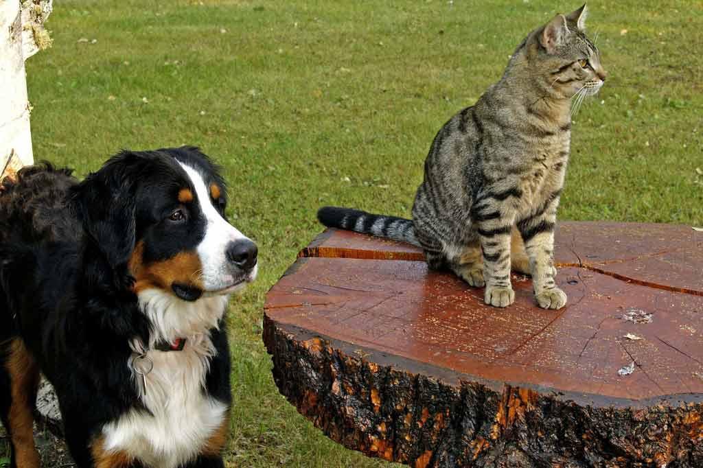 Zeckenzange für Hunde und Katzen