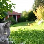 Zeckenmittel für Katzen
